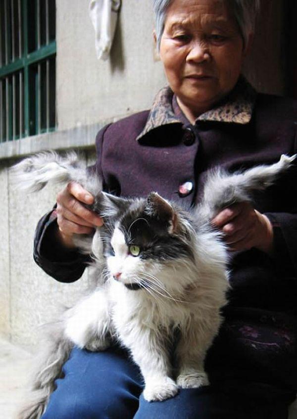 Крылатые коты
